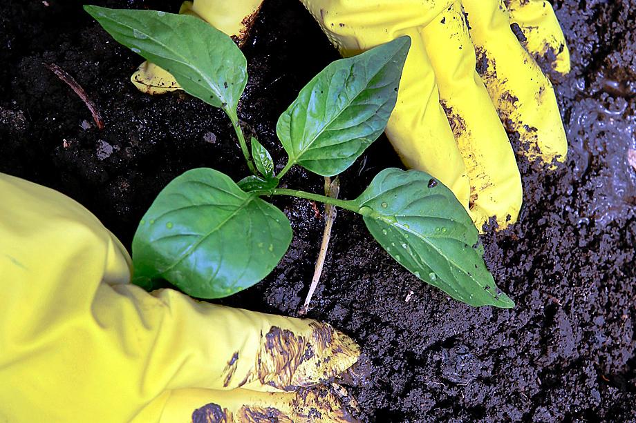Дачники требуют признать семена, удобрения и саженцы товарами первой необходимости.