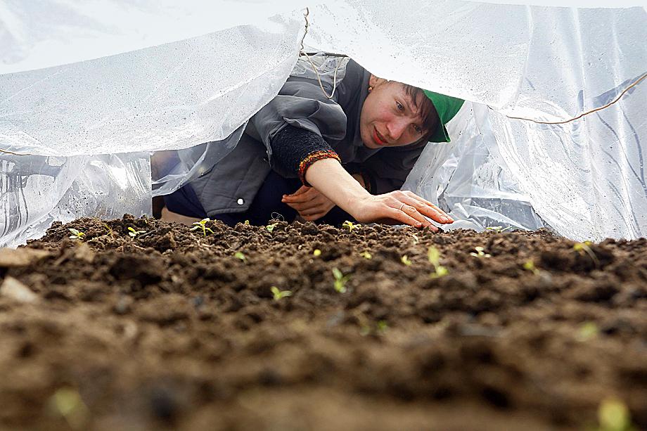 Дачная культура формировалась у россиян поколениями. А для многих вырастить свой урожай – жизненная необходимость, чтобы сделать недорогие запасы на зиму.