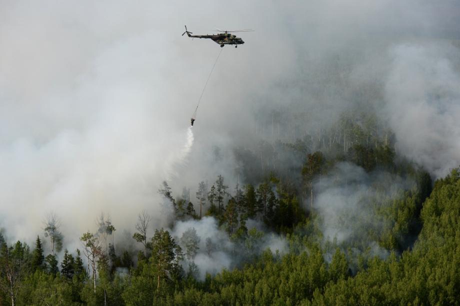 Общая площадь лесных пожаров около 223 тыс. гектаров.