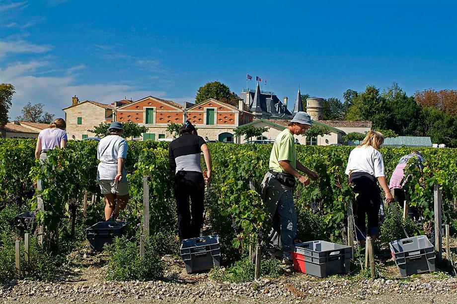 Европейские страны предлагают тем, кто потерял работу, подрабатывать в аграрном секторе. В этому году поток трудовых мигрантов не ожидается.