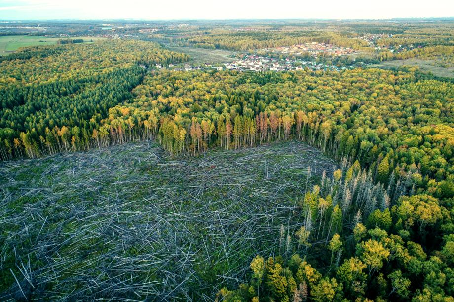 Самый простой способ принципиально изменить пожарную ситуацию в лучшую сторону – замена хвойных лесов лиственными. Но это неподъёмное мероприятие для современной Украины.