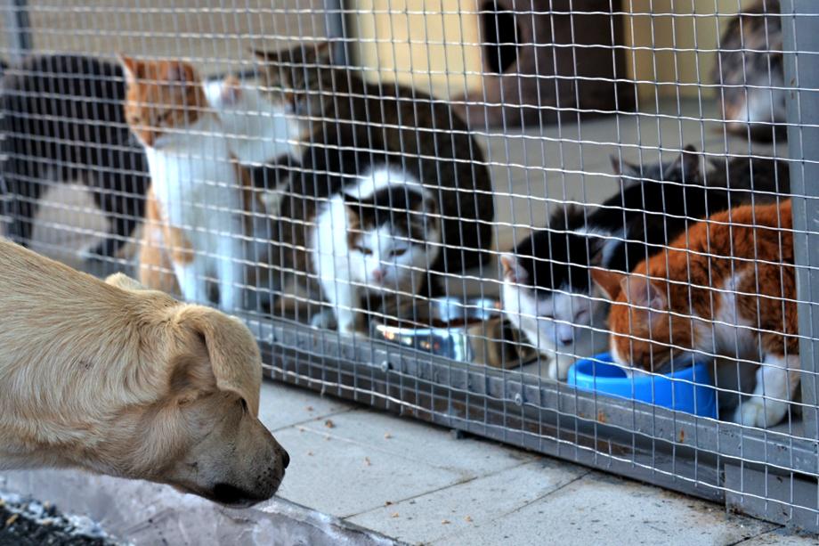Одна из самых больших проблем муниципальных приютов – некачественные корма. Когда волонтёрам запретили посещать «беспризорников», животные оказались «на сухом пайке».