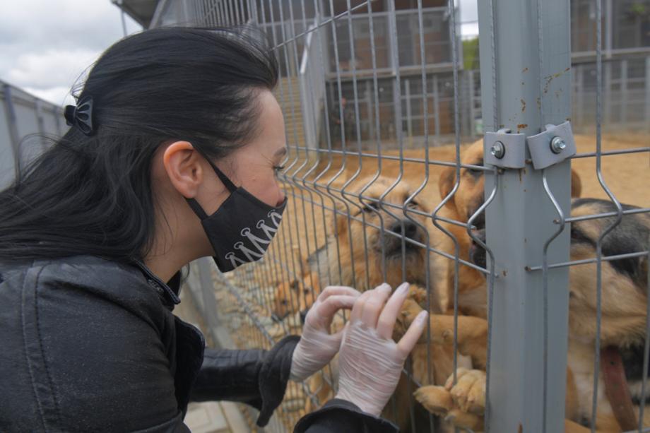 Работа с животными из приютов заключается не только в том, чтобы накормить и почистить вольеры. Волонтёры ищут питомцам новые семьи и отслеживают содержание животного новыми хозяевами.