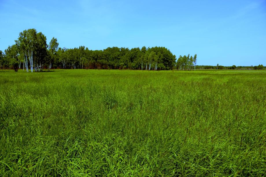 Так все будущие хозяева «Дальневосточного гектара» в первый раз видят свои владения.