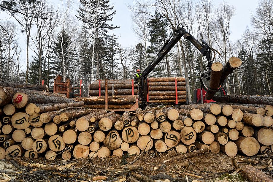 За последний год в европейской части России учреждена 31 китайская компания, связанная с добычей и продажей древесины.