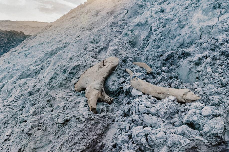 По рекомендации учёных останки мамонта пока хранятся на месторождении.