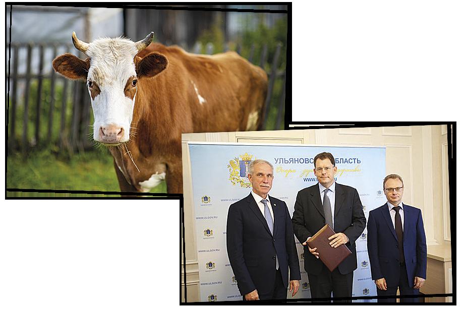 В августе 2017 года местные власти подписали с Джоном Хаскеллом (на фото справа – в центре) инвестиционное соглашение по реализации проекта для разведения коров мясной породы. В аренду на 49 лет бизнесмену было выделено 8,5 тысячи гектаров земли. Фото: Максим Конанков/Octagon.Media (слева) и официальный сайт губернатора и правительства Ульяновской области (справа)