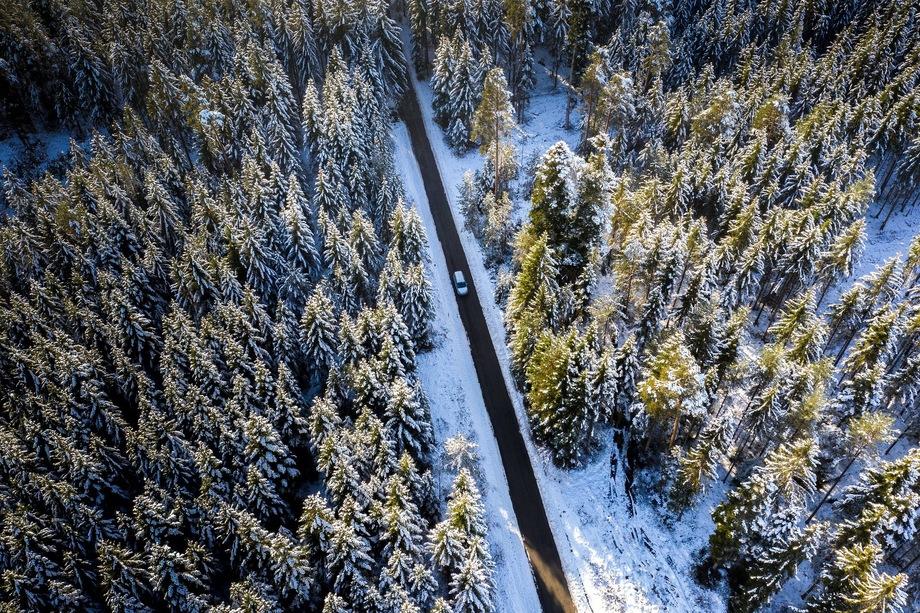 Из-за отсутствия должного контроля, по экспертным оценкам, ежегодно в России нелегально вырубается от 10 до 30 млн кубометров древесины.