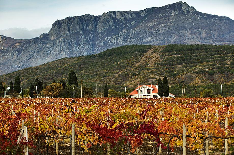 Из 87,7 тысячи га виноградников России чуть более 18 тысяч находятся в Крыму.