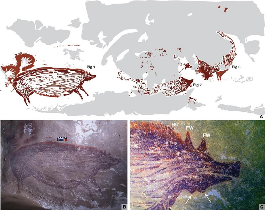 По мнению учёных, древние люди изобразили целебесских свиней, которые обитают на острове Сулавеси до сих пор.