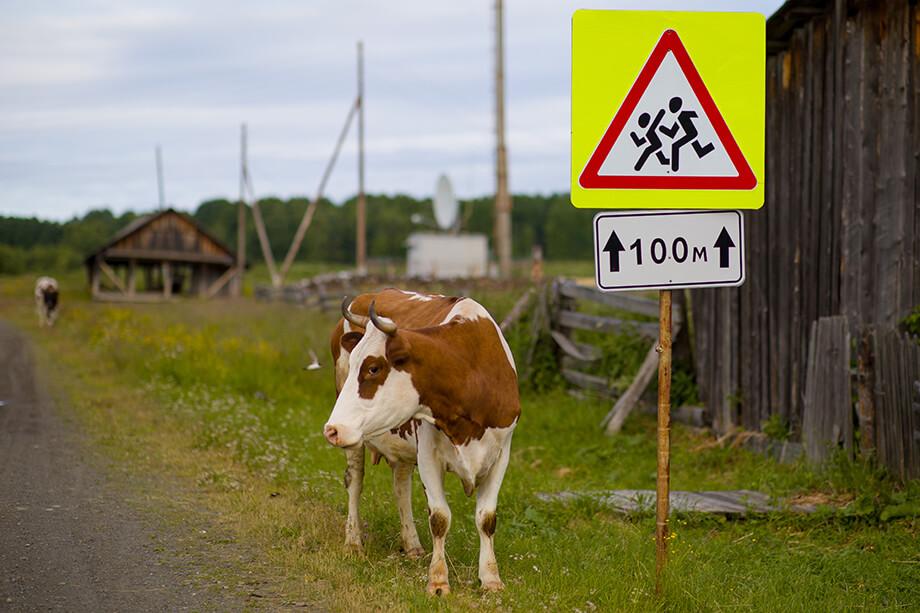 Вместе с колхозом продаётся поголовье скота и техника.