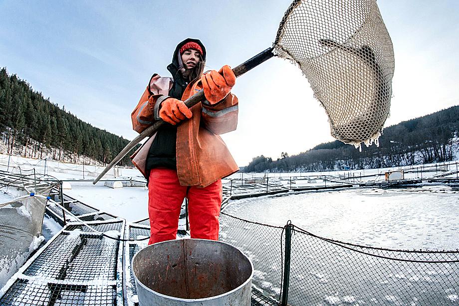 Уральская форелевая ферма теряет 70 тыс. особей из-за конфликта с партнёром.