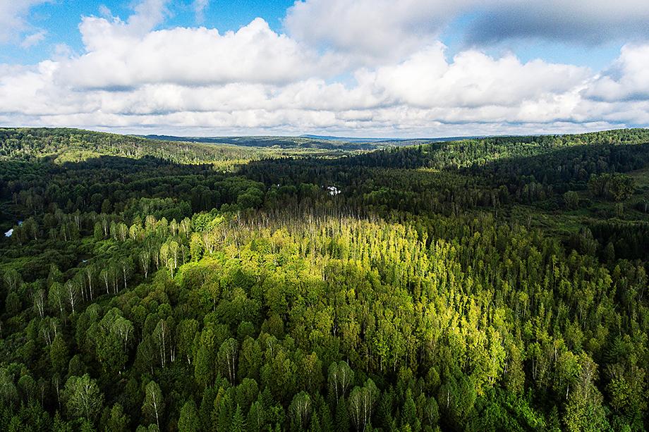 Европейцы настаивают на том, что от русских лесов, так называемых лёгких планеты, давно ничего не осталось: согласно международным рекомендациям, поглощающей способностью обладает только растущий и управляемый лес.
