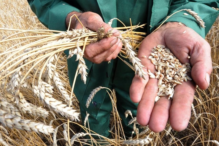 Погодные условия напрямую влияют на судьбу будущего урожая на Южном Урале, поэтому заниматься здесь сельским хозяйством рискованно – можно потерять всё.