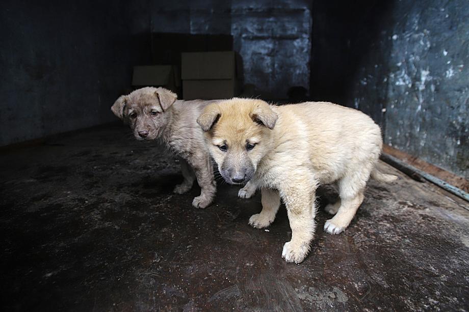 Странная ситуация – собак вроде как стерилизуют, но они по-прежнему рожают щенков.