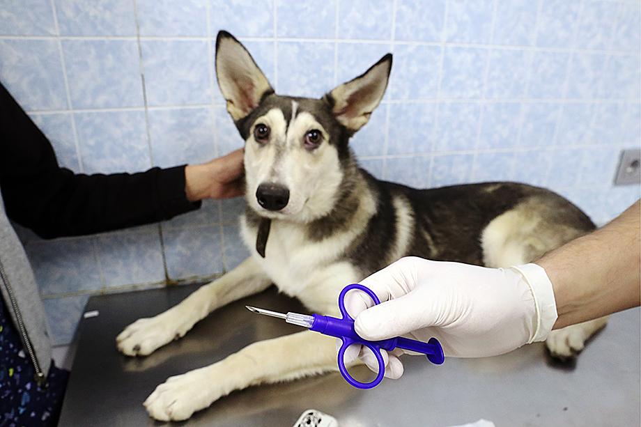 Обязательное чипирование, в том числе и домашних животных, уже давно стало правилом во многих странах мира.