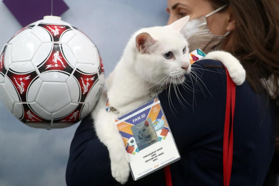 Белоснежный кот Ахилл стал официальным футбольным болельщиком.