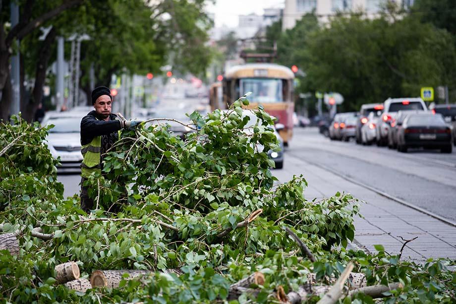 При вырубке деревьев важно найти разумное решение, учитывающее санитарные требования.