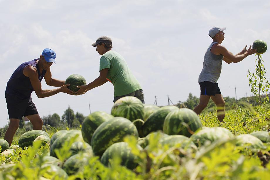 Цены даже на сезонные крымские фрукты в этом году зашкаливали, что неприятно удивило приехавших отдыхать на полуостров.