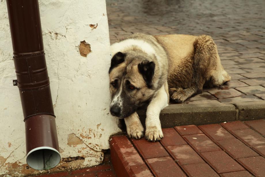 Жители Челябинска обеспокоены появлением в городе большого количества бездомных собак.