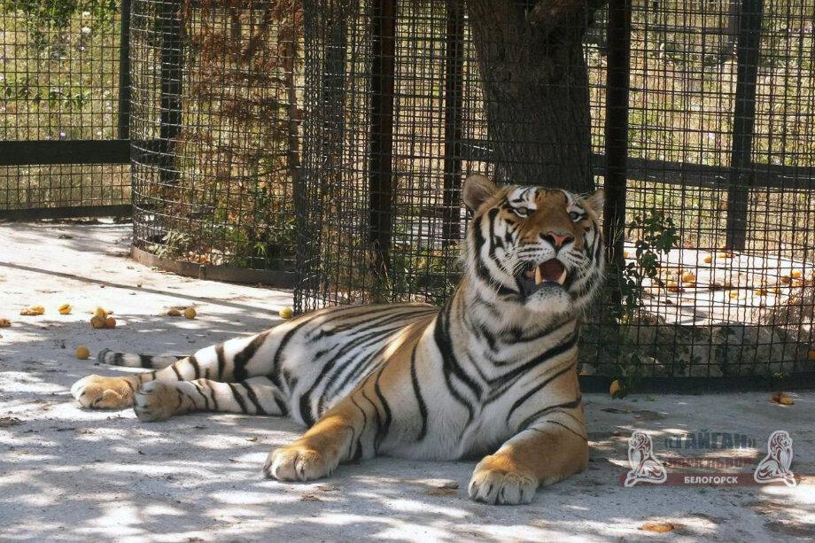 Фото: сайт зоопарка «Тайган»
