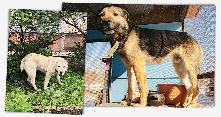 Если для собаки нет места в приюте, то её отловом будет заниматься подрядная организация.