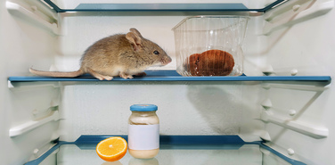 Холодильник против статистики